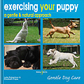 HH4357 Exercising your puppy: a gentle & natural approach – Gentle Dog Care