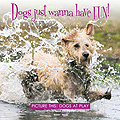 HH5201 Dogs just wanna have FUN! – Picture this: Dogs at Play