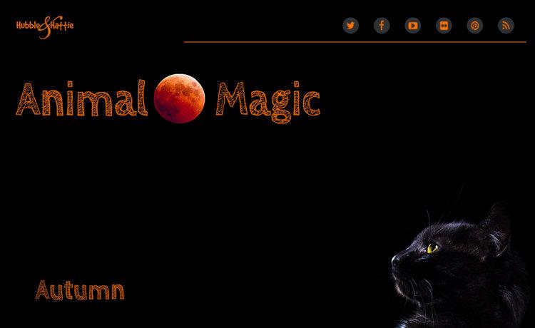 Animal Magic: Autum issue