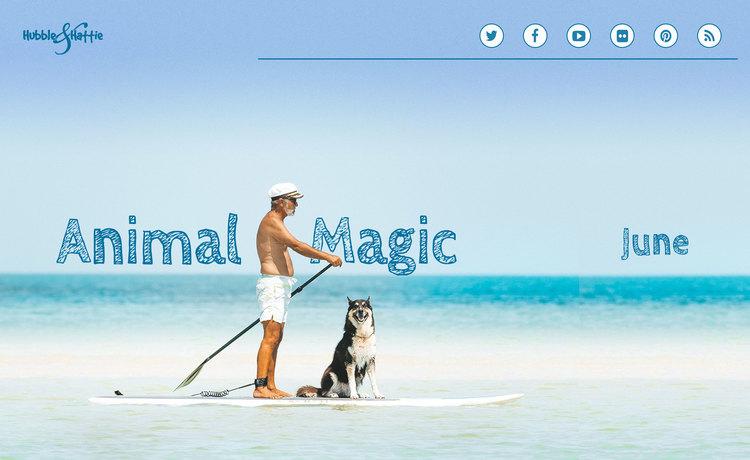 Animal Magic: June issue