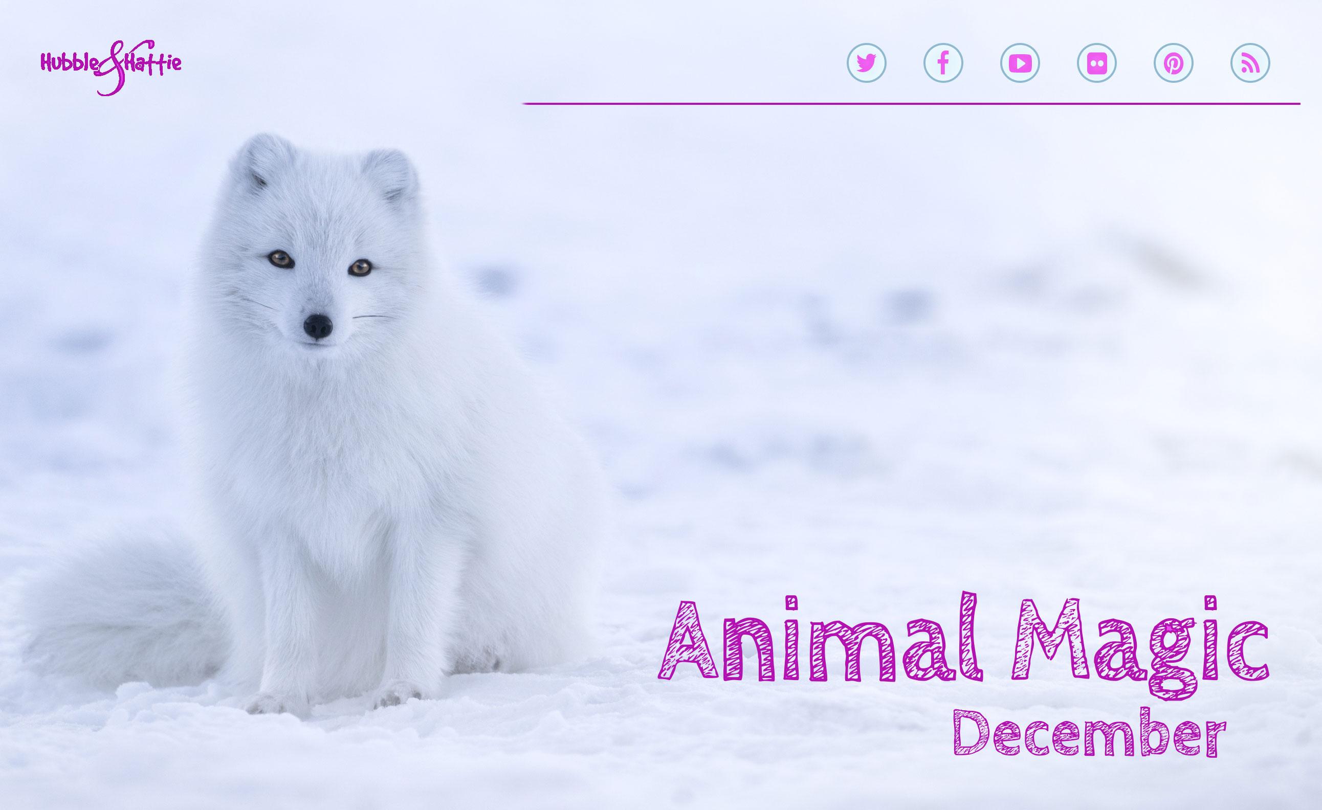 Animal Magic: December 2018 issue