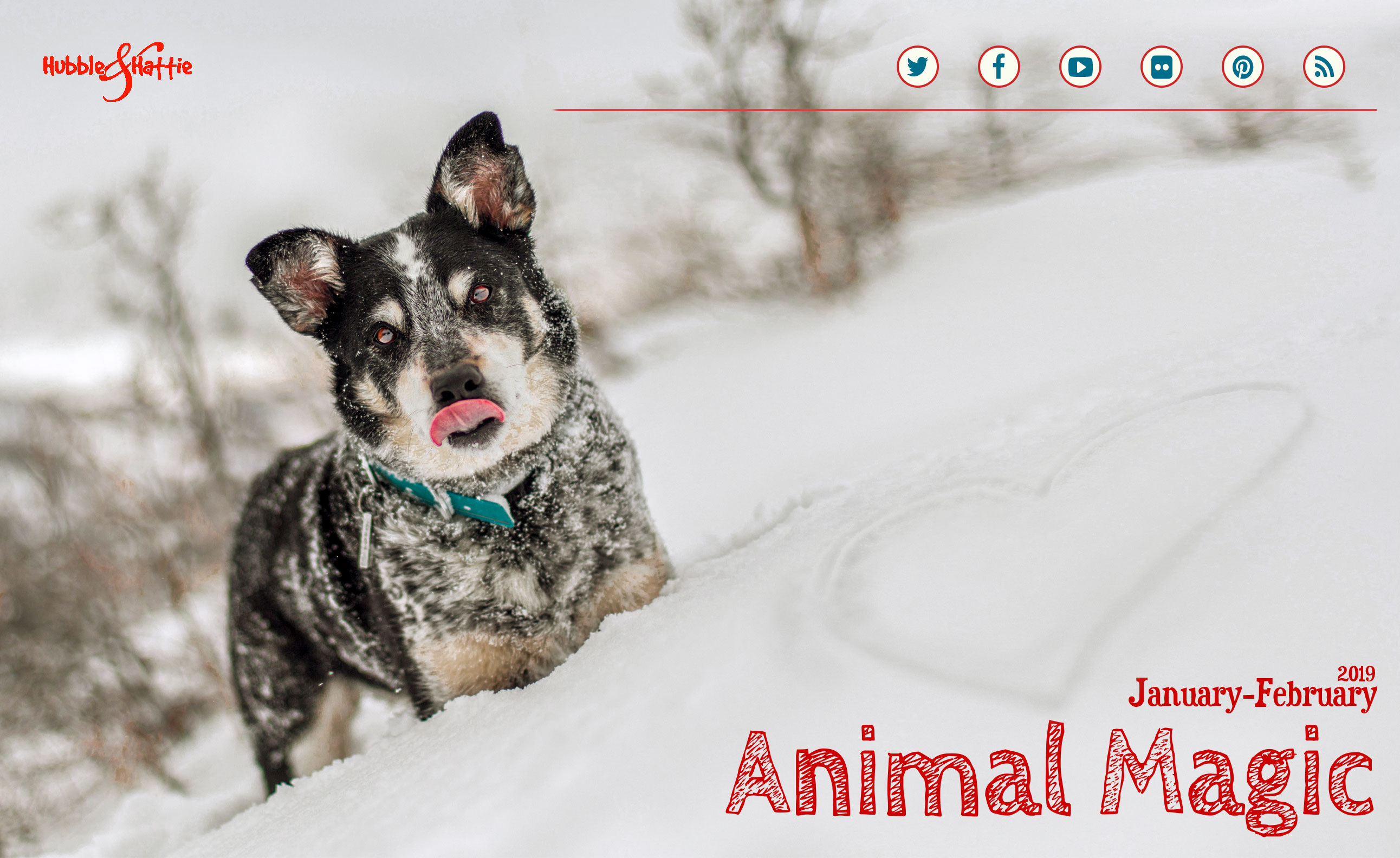 Animal Magic: Jan-Feb 2019 issue