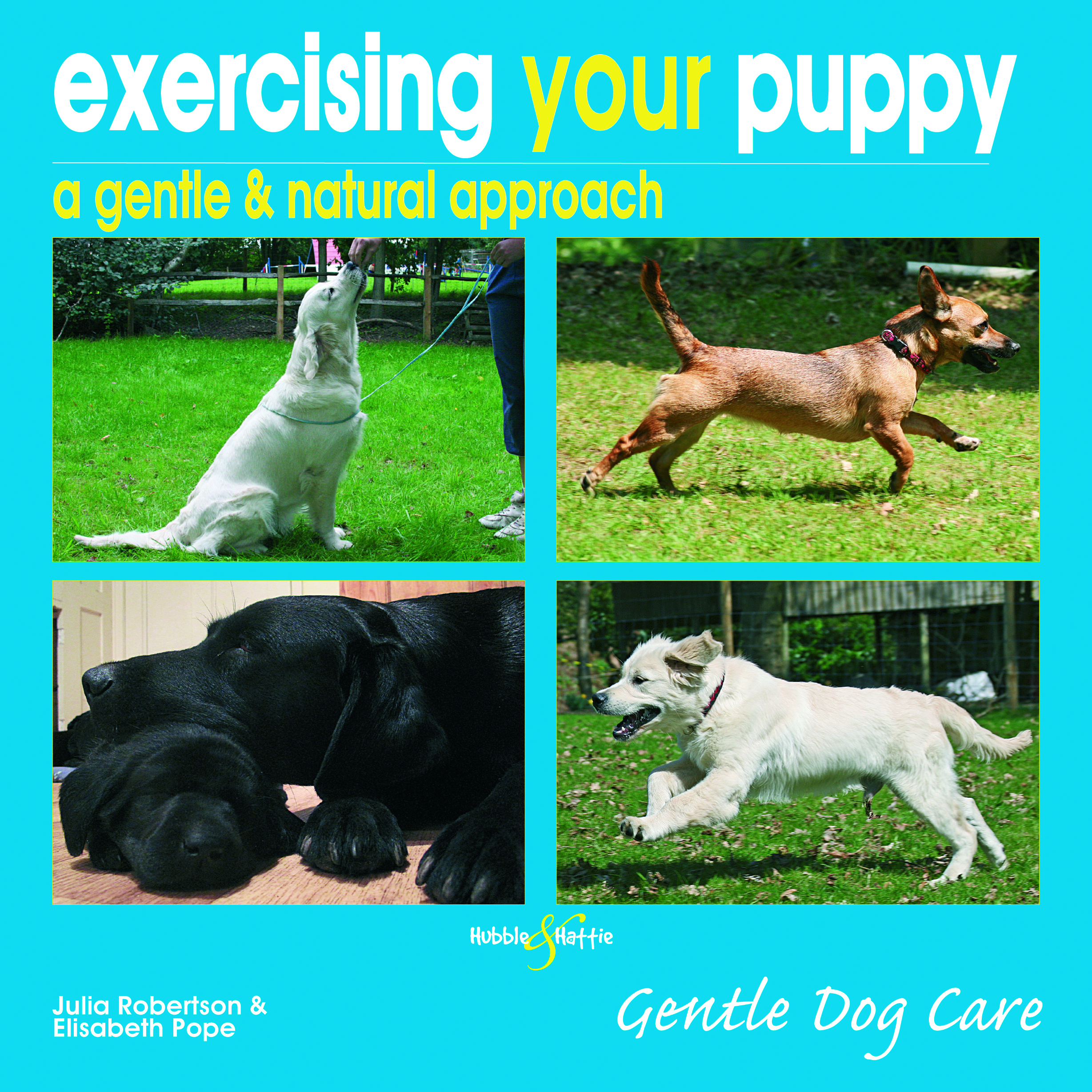 Exercising your puppy: a gentle & natural approach