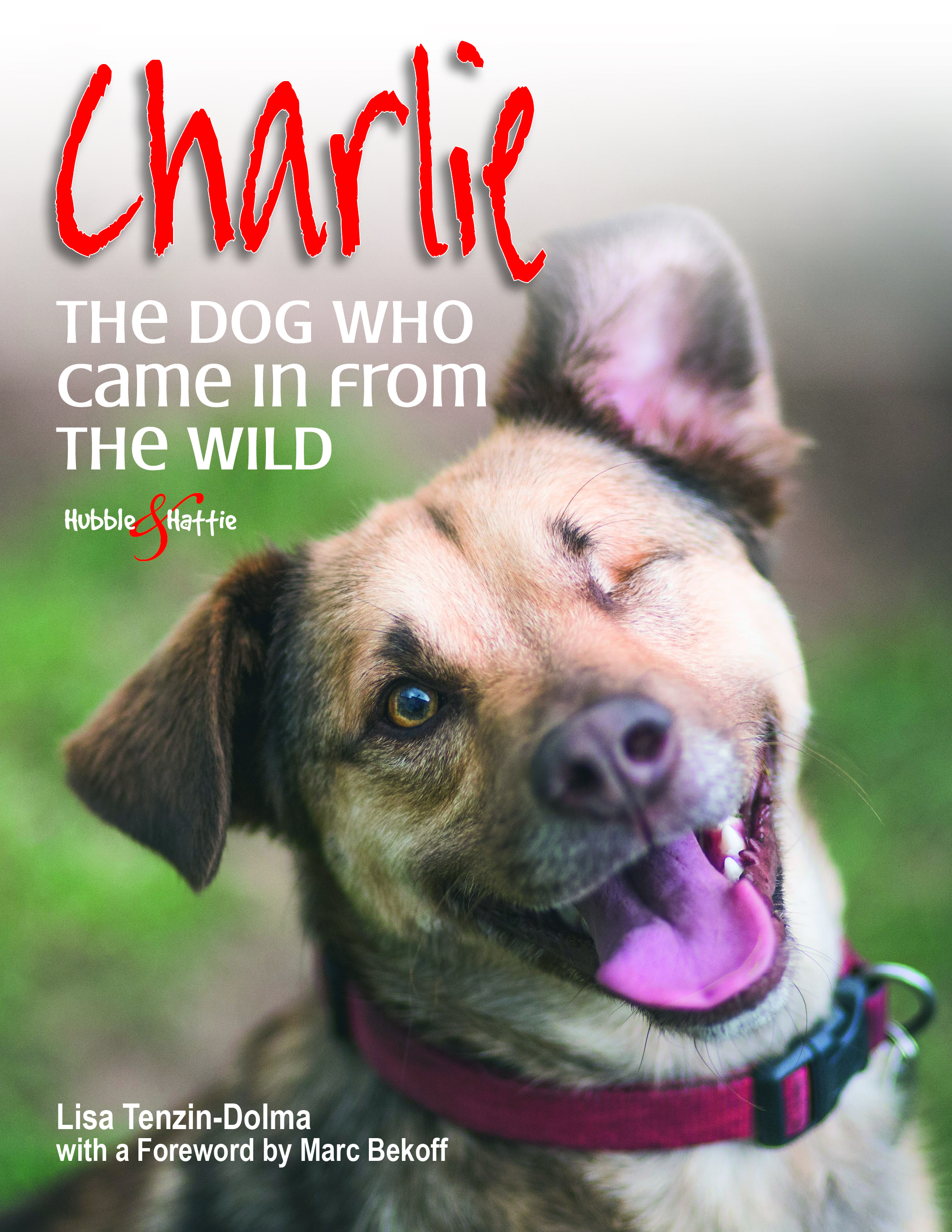Charlie - The dog who came in from the wild