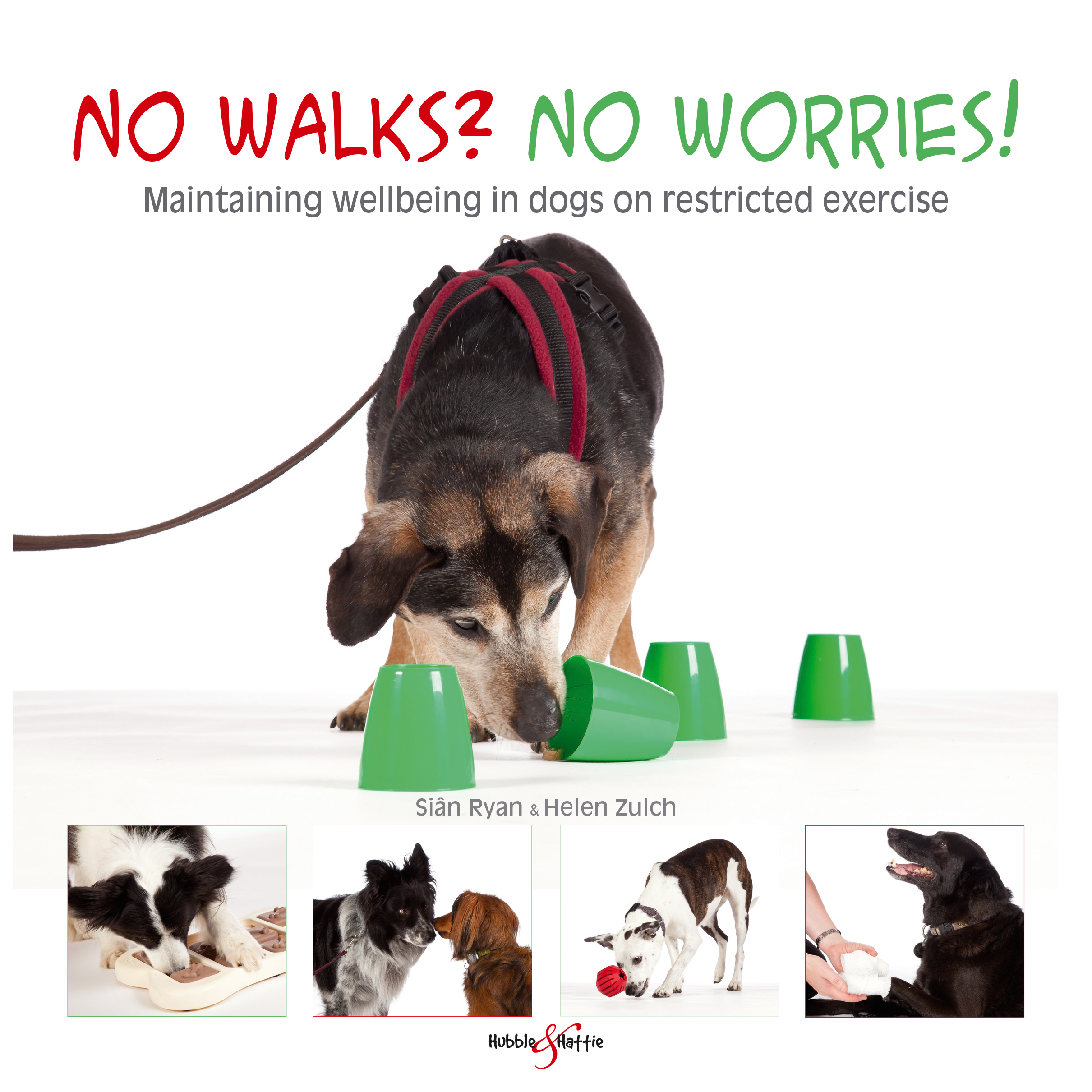 No walks? No worries! – Maintaining wellbeing in dogs on restricted exercise