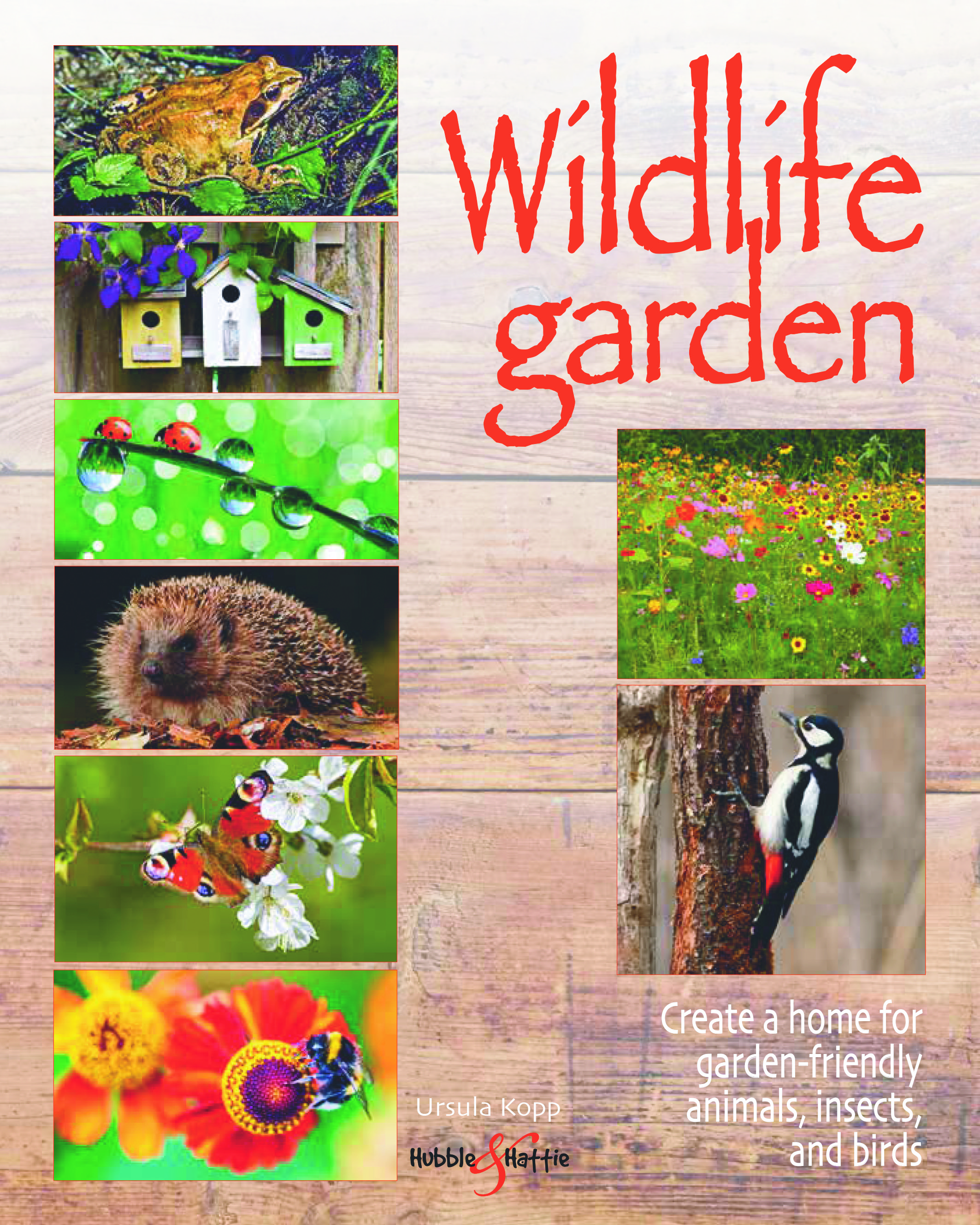 Wildlife garden - Create a home for garden-friendly animals, insects and birds