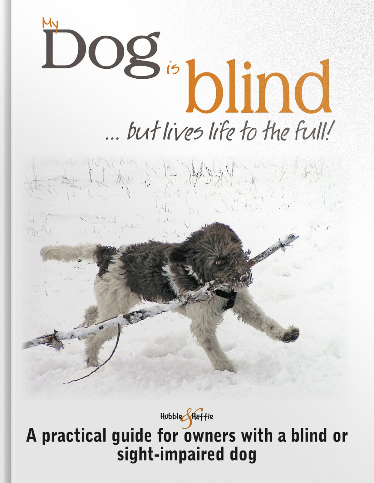 My dog is blind … but lives life to the full!