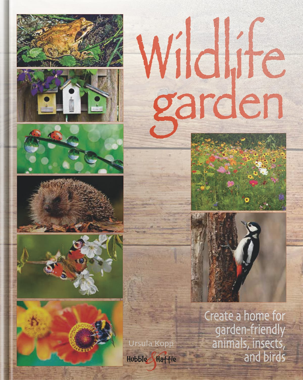 Wildlife garden - Create a home for garden-friendly animals, insects and bird