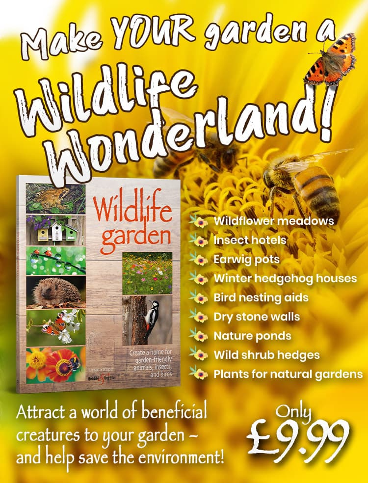 Wildlife garden - make your garden a wildlife wonderland!