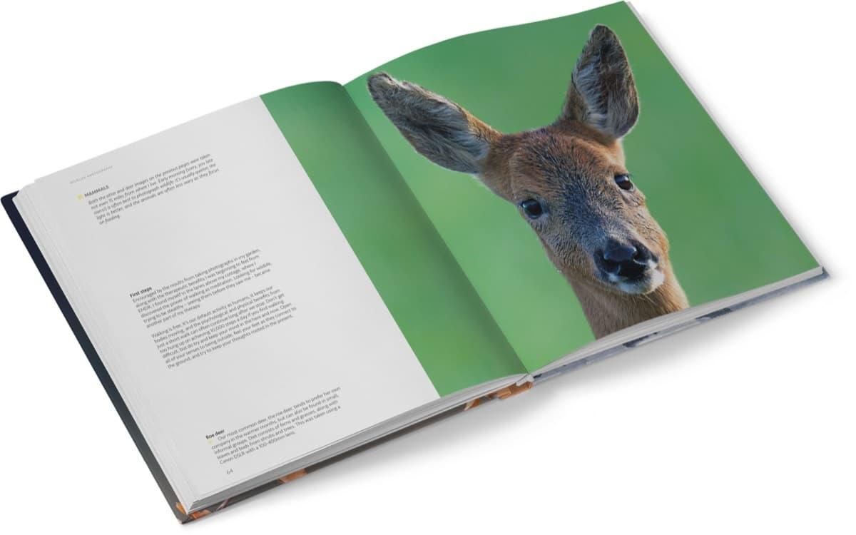 Wildlife Photography, Paul Williams