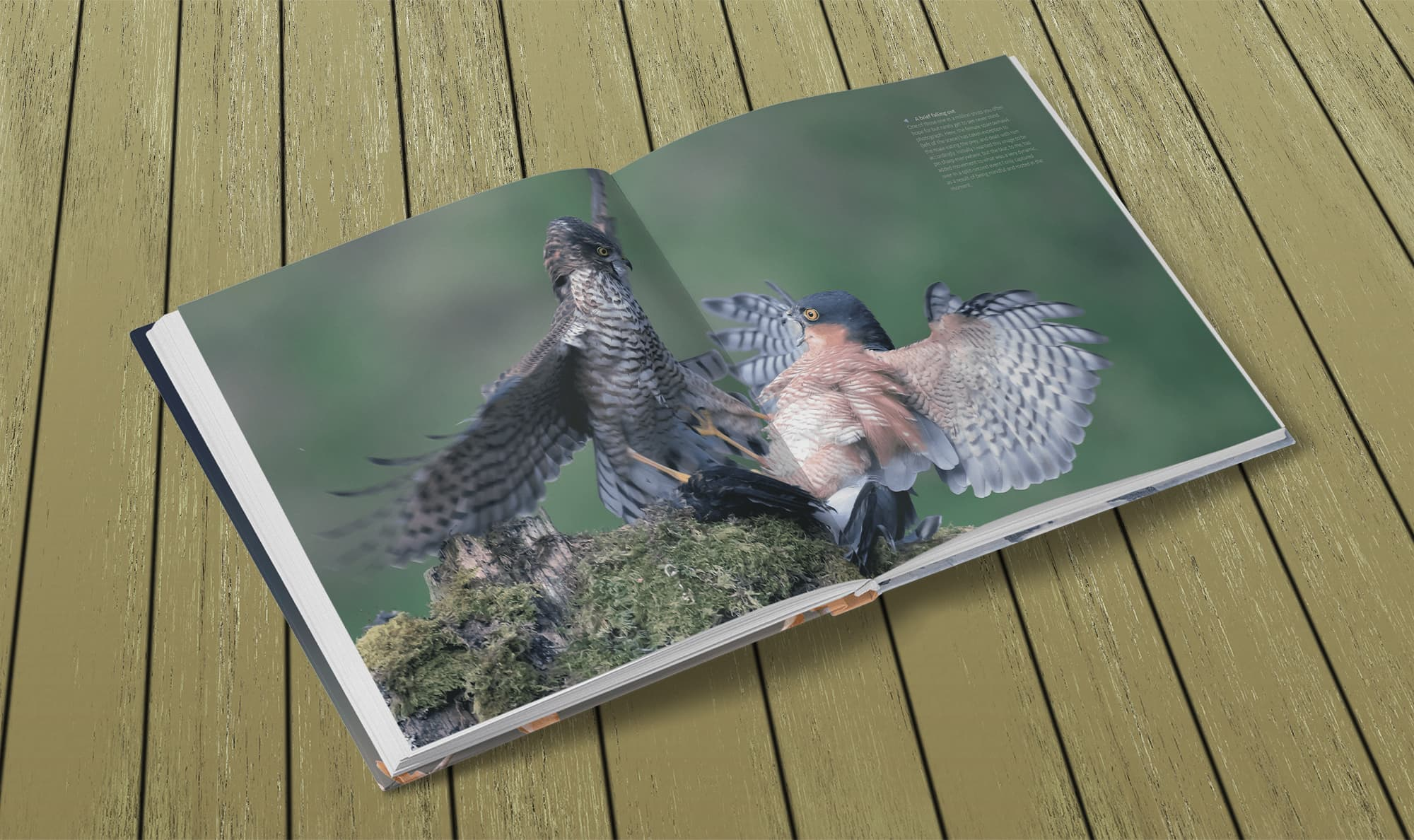 Wildlife Photography by Paul Williams – fighting Sparrowhawks
