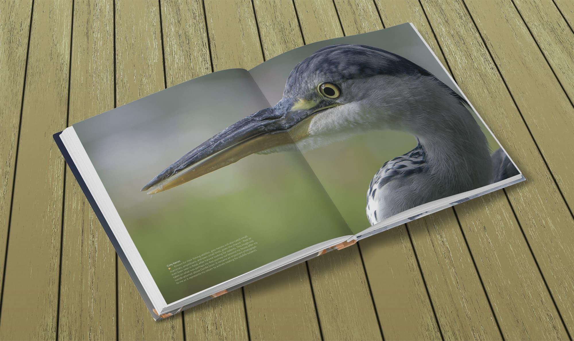 Wildlife Photography by Paul Williams – Heron