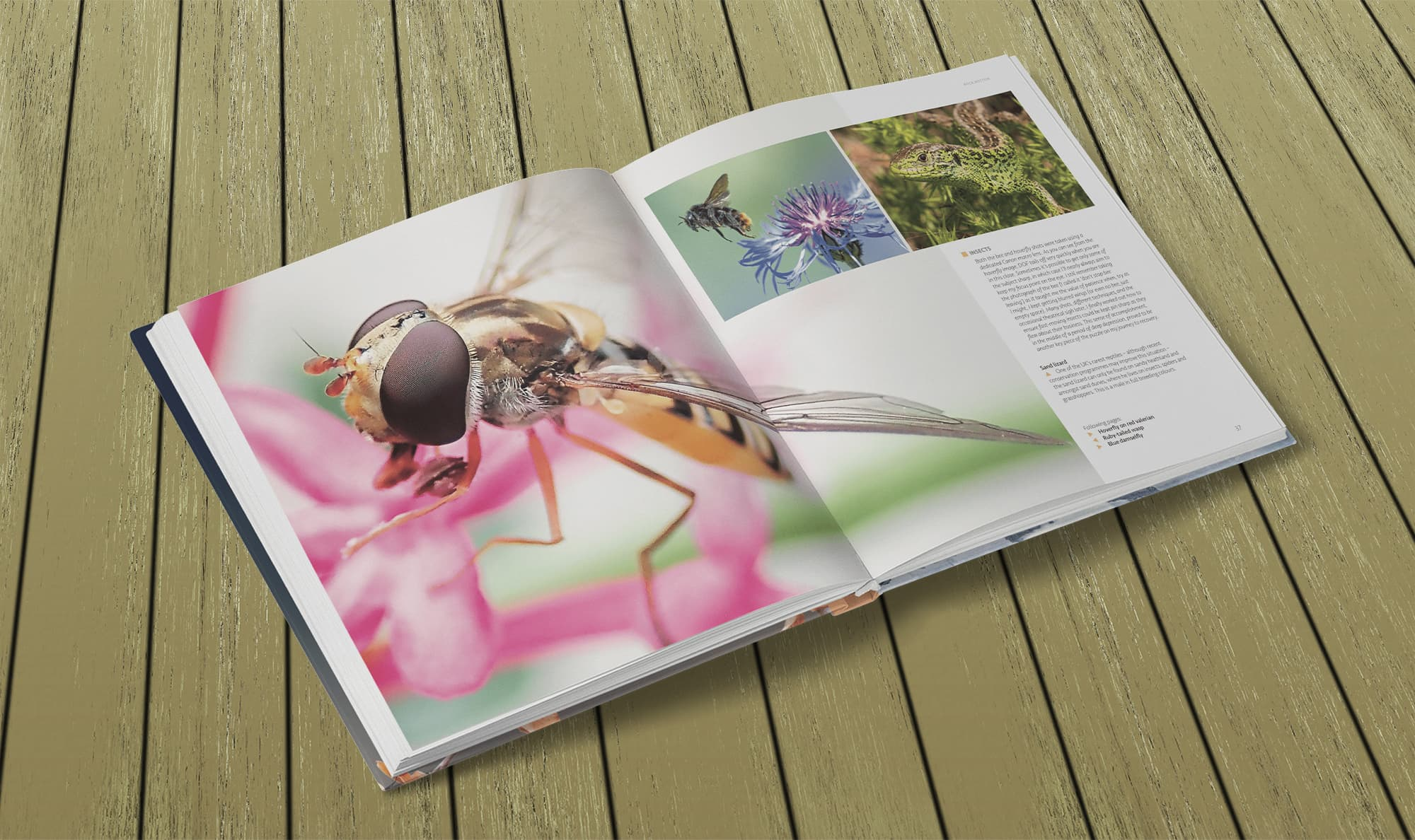 Wildlife Photography by Paul Williams – Hoverfly macro