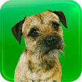 AHH4319 You and Your Border Terrier – The Essential Guide